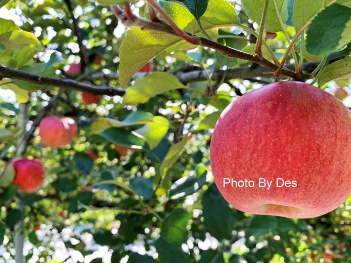 apple_10_1.JPG