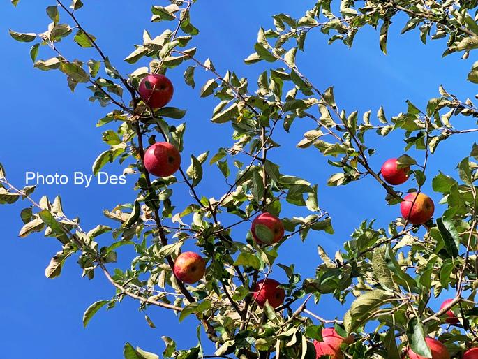 apple_15.JPG
