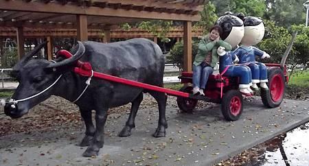 坐著牛車回娘家