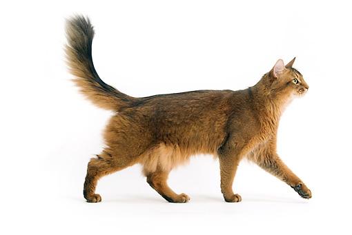 CAT-01-JE0076-01P