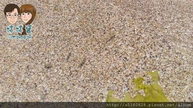 黃金咖啡海岸海邊沙灘白沙灘貝殼沙小魚