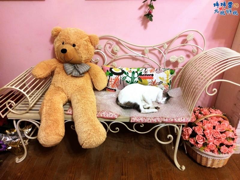 苗栗岩川莊園餐廳櫃檯佈景大熊熊歐風椅店貓