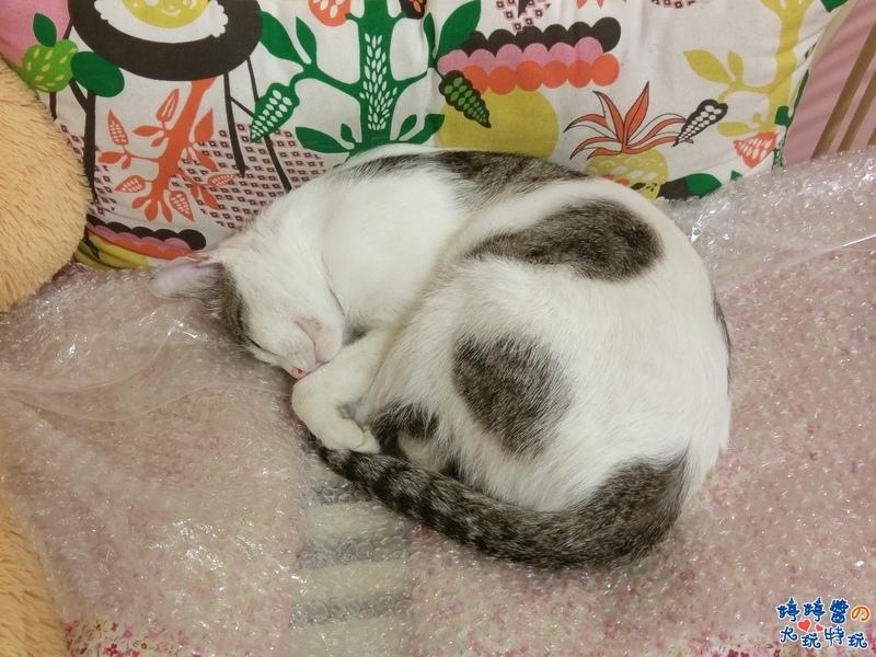 苗栗岩川森林民宿莊園餐廳店貓