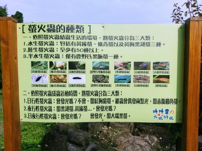 苗栗岩川森林民宿莊園餐廳看板螢火蟲的種類介紹