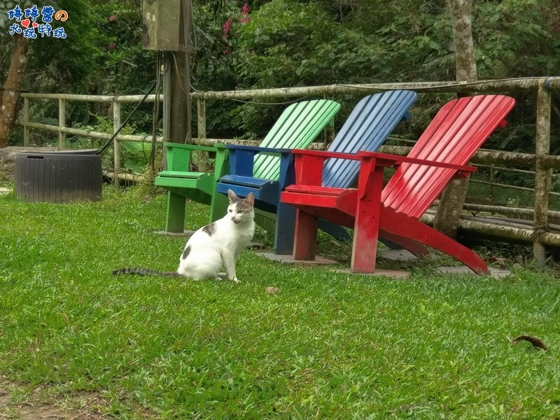 苗栗岩川森林民宿莊園餐廳店貓及戶外座椅