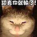 貓(表情)-01.jpg