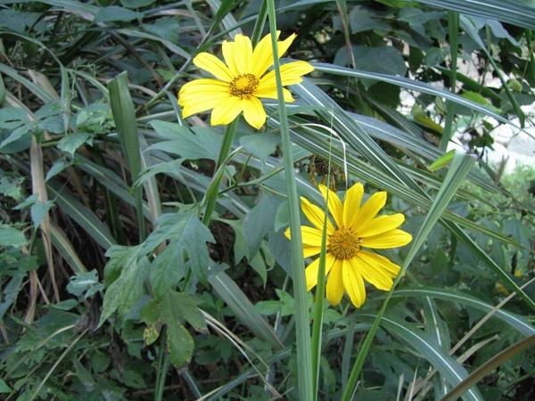 照片 花朵.JPG