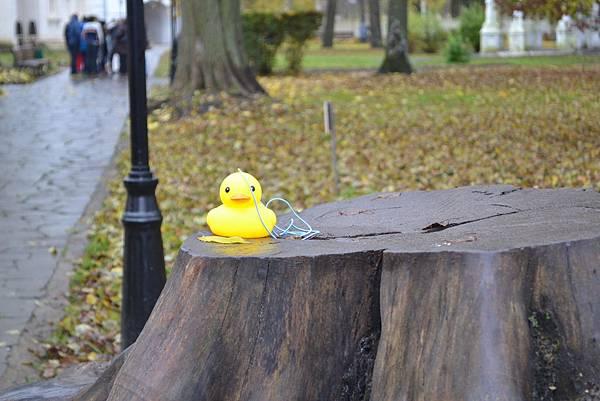 孤單黃色小鴨