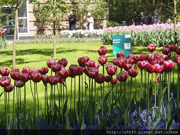 庫肯霍夫花園