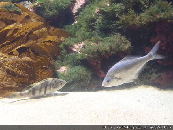 聖地亞哥_水族館