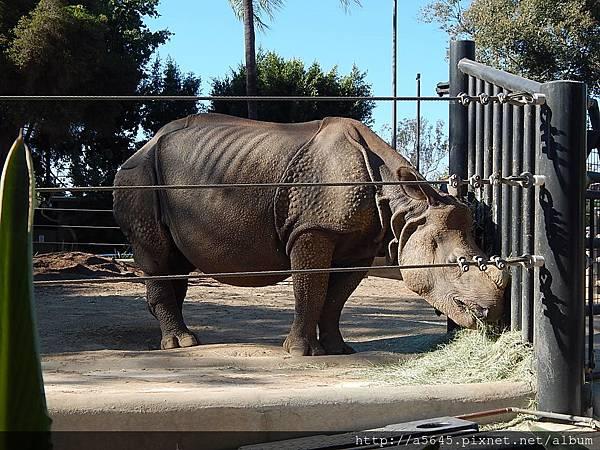 聖地亞哥動物園犀牛