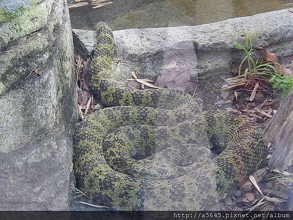 聖地亞哥動物園蛇