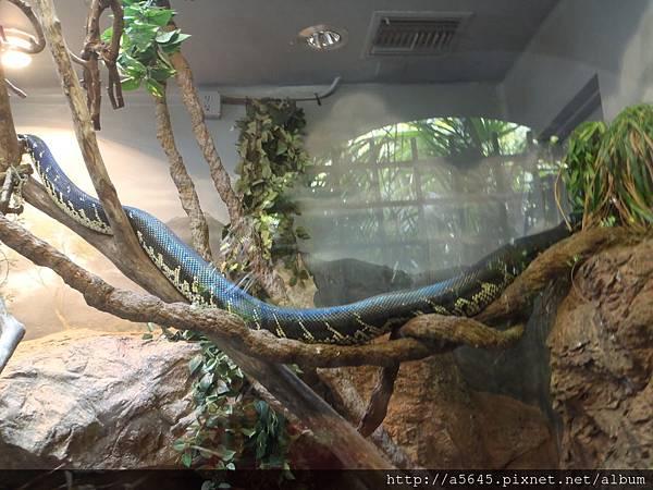 聖地亞哥_動物園