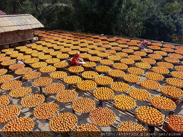 """攝影界最夯的""""空拍、空中攝影"""" — 在味衛佳柿餅觀光農場3"""