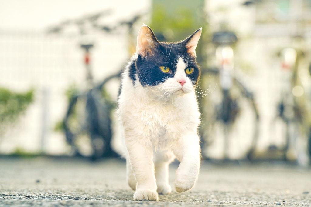 旅貓日記影評心得電影線上看