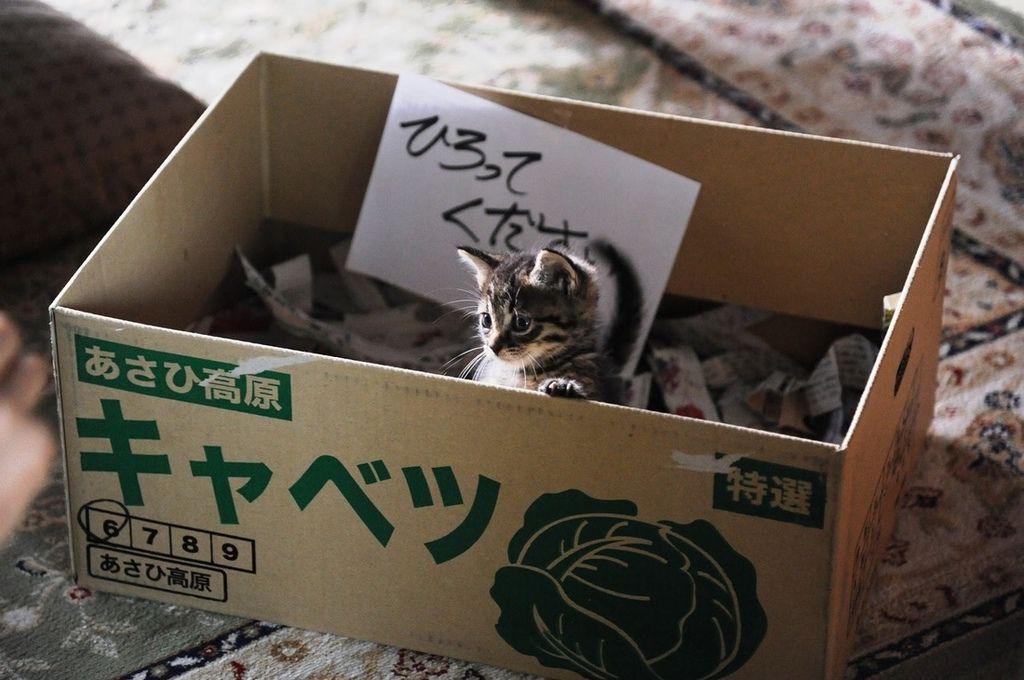 電影【如果這世界貓消失了】劇照 (5).jpg