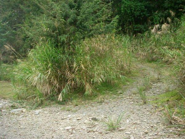 往秀湖的岔路