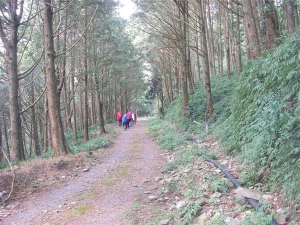 整齊茂密得人造林
