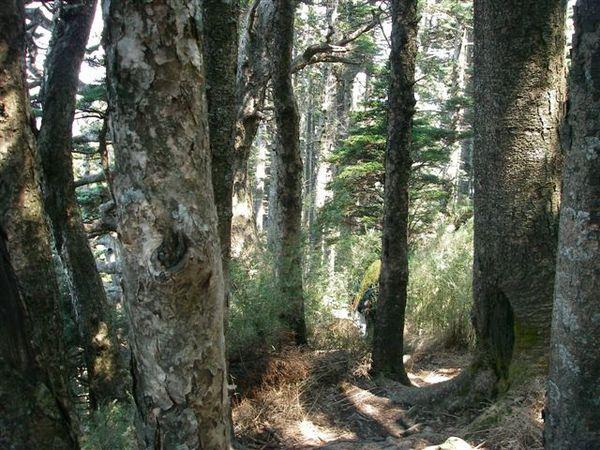 小徑在林間穿梭