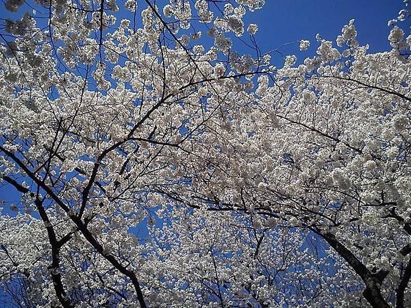 上野公園-4