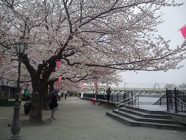 隅田公園-9