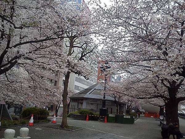 隅田公園-8