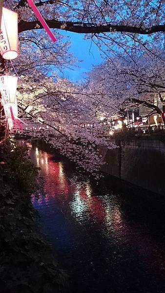 目黒川-夜櫻-9