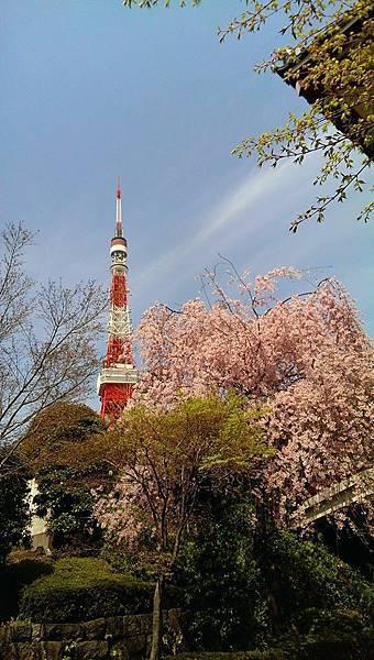 大本山 増上寺-3