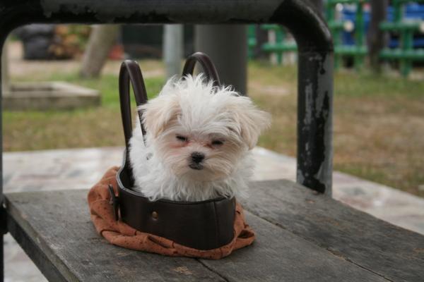 剛到小公園貝貝準備從外出袋出來