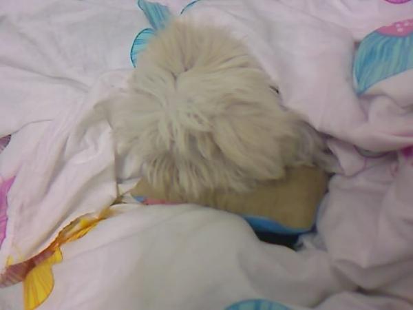貝貝的小枕頭