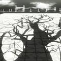 貓物語(黑) (YYDM-11FANS) -04[翼家族 其之四][BDRIP][720P][X264-10bit_AACx2][(005805)2016-05-15-11-37-02].JPG