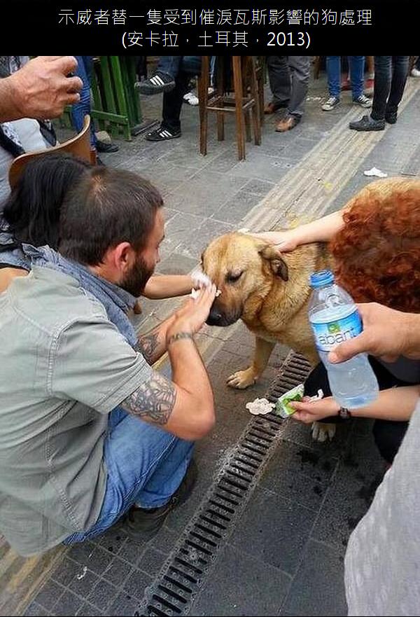 20.示威者替一隻受到催淚瓦斯影響的狗處理.20.png