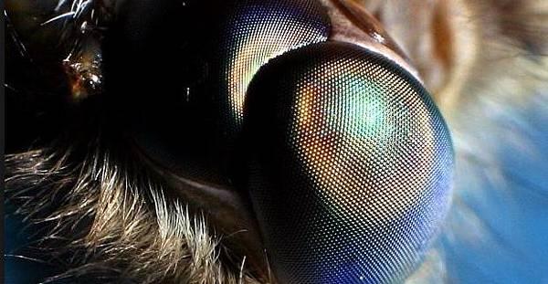 Moth Eyes Inspire Different Solar Cell,[英文聽力] TOEFL,托福,免費學習教材,筆記 練習技巧,準備-2,科學美國人SSS,English listening