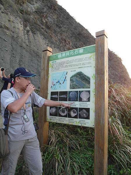 q過港貝化石層.JPG