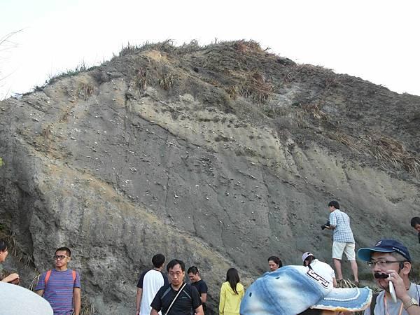 q過港貝化石層2.JPG