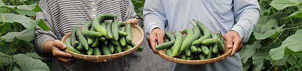 vegetable_default_18.jpg