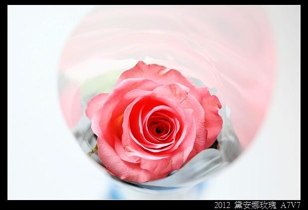 nEO_IMG__MG_9827.jpg