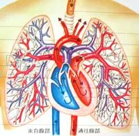 respiratorysys
