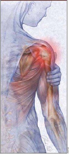 肩週邊關節韌帶肌腱.jpg