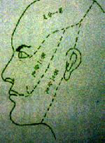 三叉神經路線.jpg