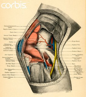 膝關節側面圖.jpg