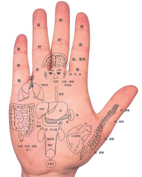 hand5.jpg
