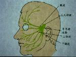 三叉神經.jpg