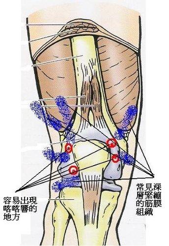膝關節構造.jpg