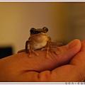 雨蛙比賽.jpg