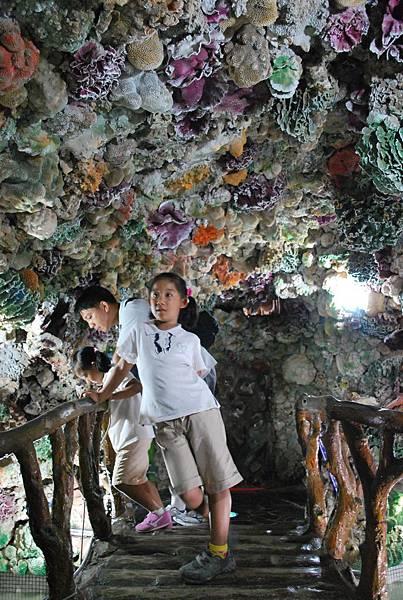 大義宮地下室看海龜.JPG