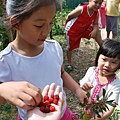 公公家吃野莓.JPG