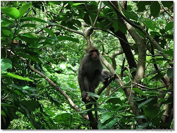 虎視眈眈的猴子