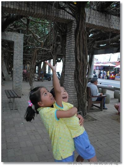 兩小很努力想摸到榕樹鬚根