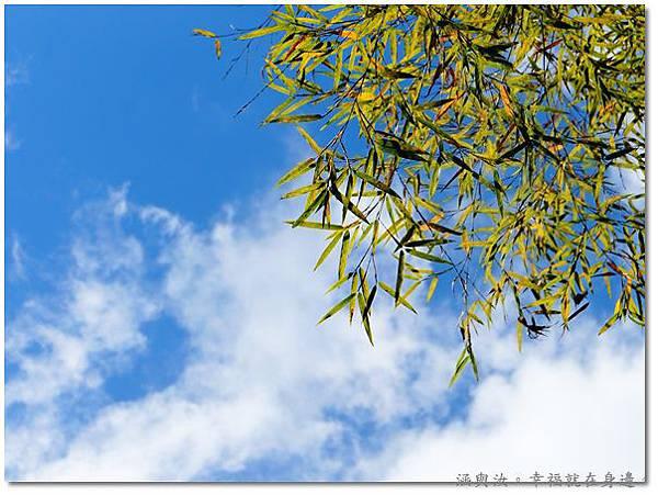 汝汝拍的竹林天空.jpg